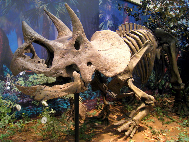 reasons behind dinosaurs extinction Dinosaur extinction: when and how did dinosaurs become extinct  hypothesis:  changes in the earth's climate caused the mass extinction this could have.